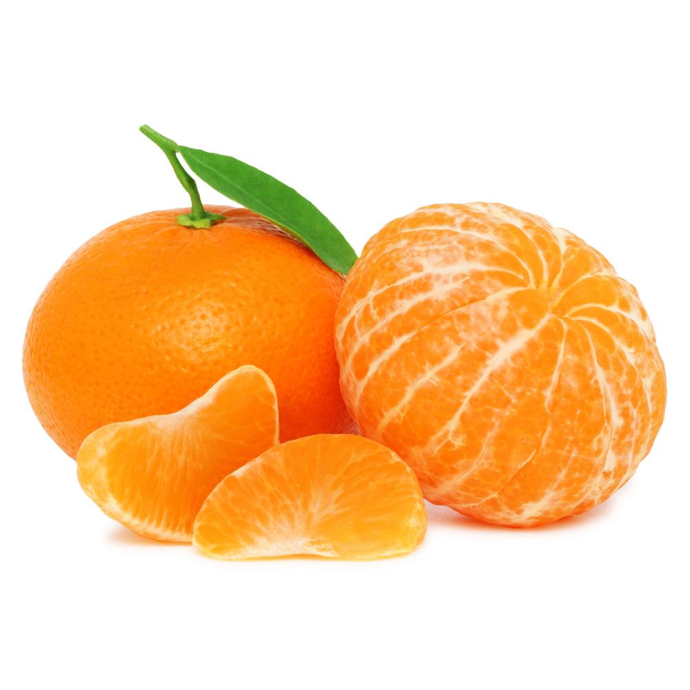 Bloomsz Citrus Fina Sodea Clementine Orange Tree 1 Year Old 1 Pack Bloomsz